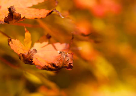 Close-up details of some autumnal looking leaves. photo