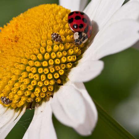 Numerous bugs meet up for a pollen binge! photo