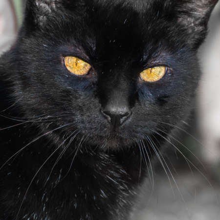 A portrait of a black cat with shining green eyes  Stock Photo - 13048543