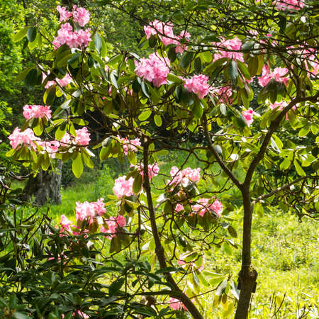 Flowers seem to glow in a small bush as the sun pours down on them  Stock Photo - 13810030