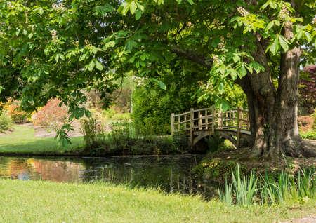 exbury: Looking ar the Japanese Bridge next to the tree at Exbury Gardens