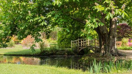 hampshire: Buscando ar el puente japon�s al lado del �rbol en los jardines de Exbury Foto de archivo