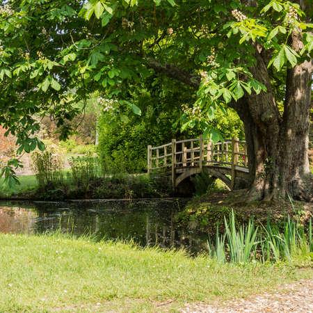 japanese bridge: Looking ar the Japanese Bridge next to the tree at Exbury Gardens
