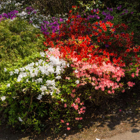 exbury: A collection of beautiful blooms at Exbury Gardens