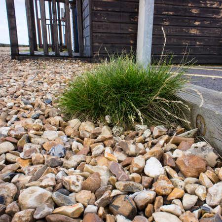 clump: A clump of grass, growing on the beach outside a beach hut