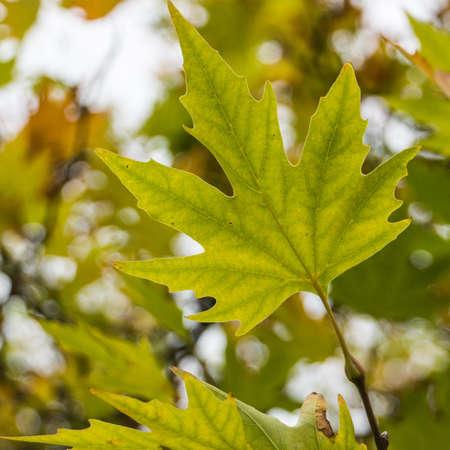 exbury: A close-up study of a green leaf