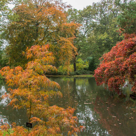 A collection of trees situated around a pond