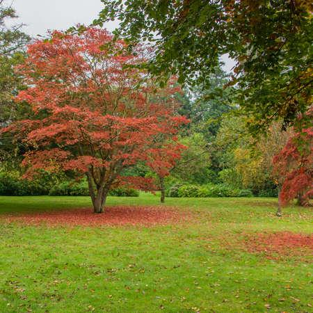 An array of autumn colour at Exbury gardens  Stock Photo