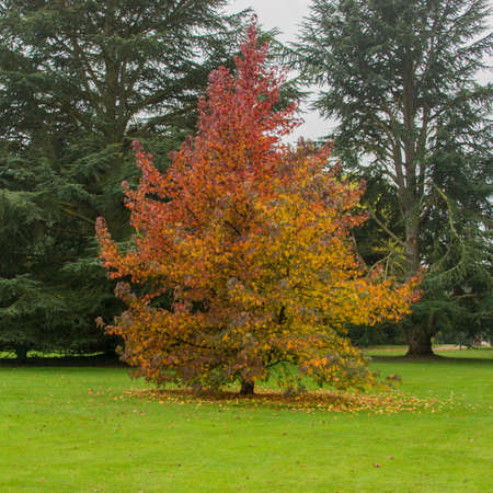 A small tree starts to shed its autumn coat