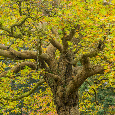 exbury: The trunk and branches of a tree rise up through the leaves  Stock Photo