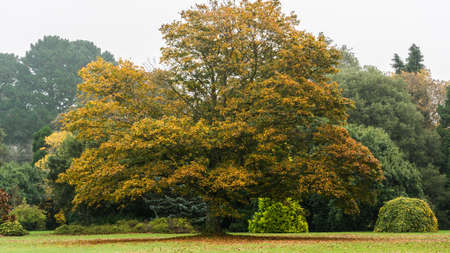 exbury: Autumnal colours on display at a local park