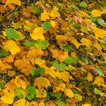 A frame full of autumn leaves
