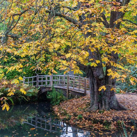 autumn horse: A view of a Japanese style bridge, framed by a horse chestnut tree  Stock Photo