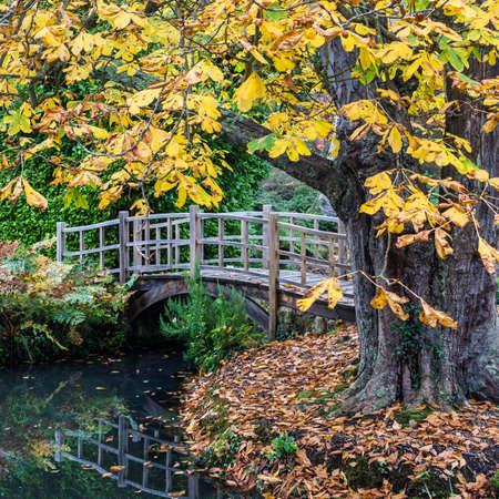 Bir at kestanesi ağacı tarafından çerçeveli bir Japon tarzı köprü bir görünüm,