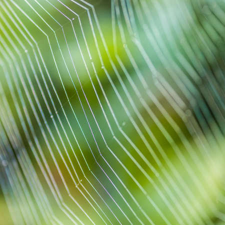 A close-up shot of the threads of a spider web  photo
