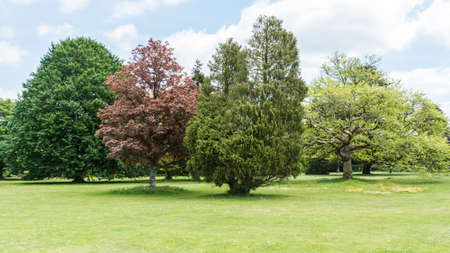 A shot of some trees in a park  Stock Photo