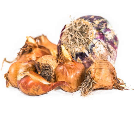 A collection of springtime bulbs, including hyacinth, tulip, iris and crocus