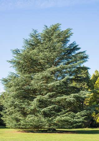 exbury: A shot of a tree. Stock Photo