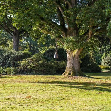 exbury: A shot of the very large burmese bell oak at Exbury Gardens, Hampshire, England. Stock Photo