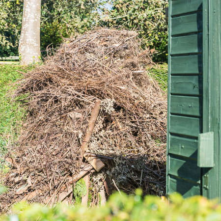 guy fawkes night: A shot of a garden bonfire, probably not built in the safest of places!