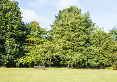 exbury: A shot of a bench situated in front of a line of mature trees.
