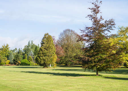exbury: A shot of a multitude of different trees. Stock Photo