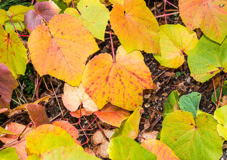 exbury: A macro shot of some yellow leaves. Stock Photo