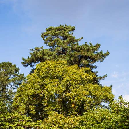 exbury: A shot of some tree tops against a blue sky.