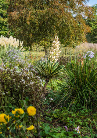 exbury: A shot of a yucca plant growing at Exbury Gardens, Hampshire, UK. Stock Photo