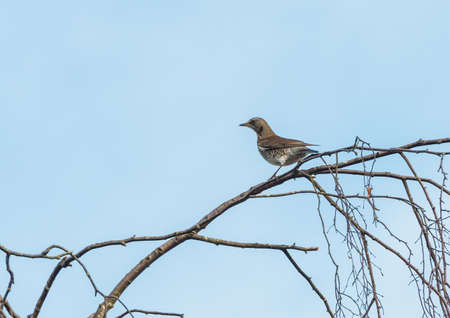 A bird sits on the bare branches of a tree. photo