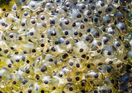 A macro shot of some frogspawn in a pond. Imagens