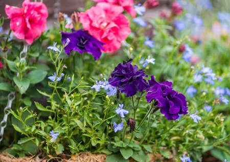 hanging basket: A macro shot of a group of flowers in a hanging basket. Stock Photo