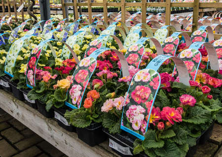 A shot of numerous spring plants for sale at the garden centre.