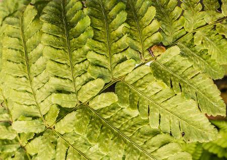 fern leaf: A macro shot of a green fern leaf.