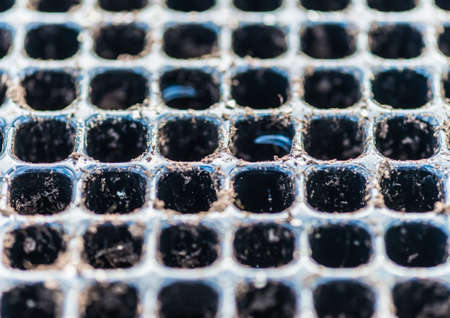 abstract seed: An abstract macro shot of a small seed tray.
