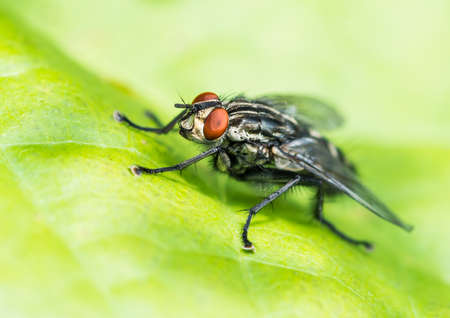 A macro shot of a fly sitting on a green leaf. Stock Photo