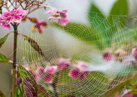 dewdrop: A macro shot of a dewdrop covered spider web.