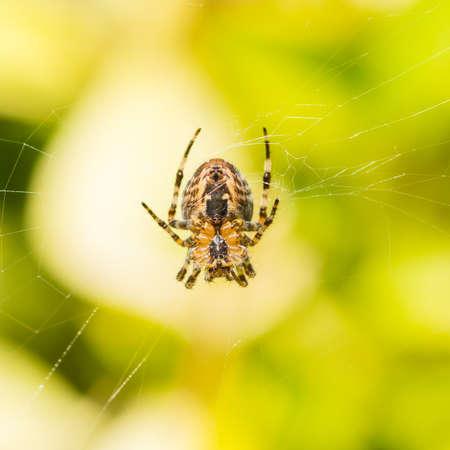 creepy crawly: A macro shot of the underside of a garden spider.