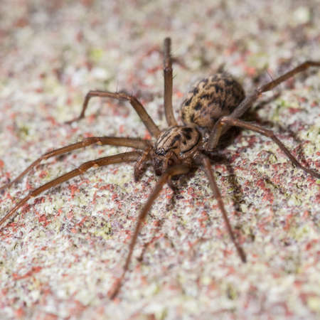 eight legged: A macro shot of a large spider sitting on a wall.
