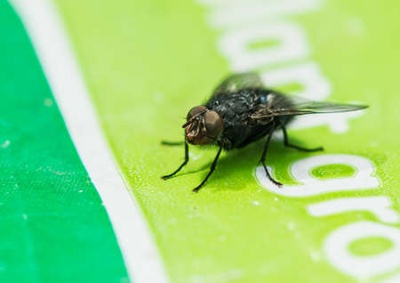 crawly: A macro shot of a fly sitting on bag of compost.