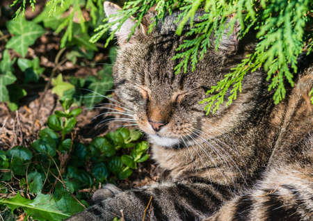 snoozing: A shot of a tabby cat taking a nap. Stock Photo