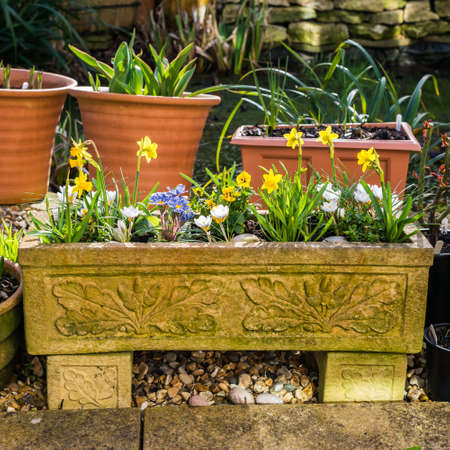 A shot of some spring bulbs flowering in the sunshine. Stock Photo