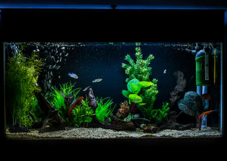 A shot of a 40 gallon, 3ft long tropical fish aquarium.