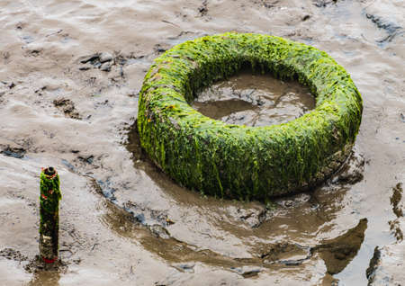 A shot of a rubber tyre covered in seaweed and resting in the mud of a harbour.