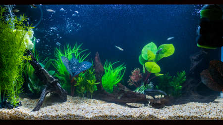 A shot of an aquarium with plastic plants, bog wood and zebra danio fish.
