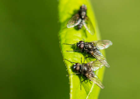 A macro shot of some flies sitting on a green leaf.