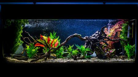 Una foto de un acuario de peces tropicales de 55 galones y 4 pies de largo. Foto de archivo - 83187792