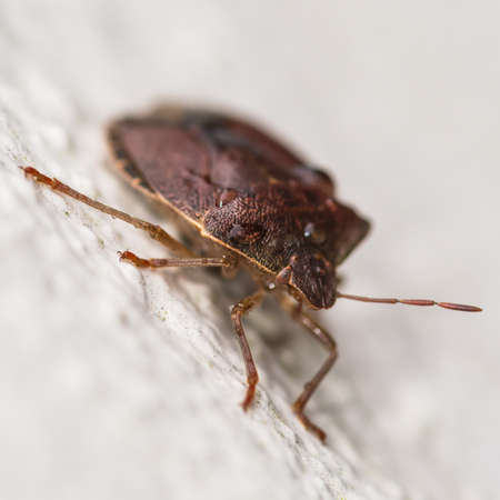 A macro shot of a forest bug hanging onto the outside wall of a house. Stock Photo