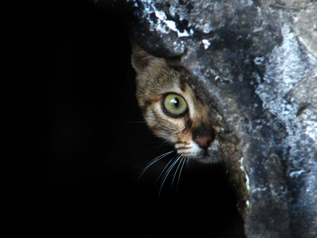 afraid cat , shy cat , cat hiding , animals shelter