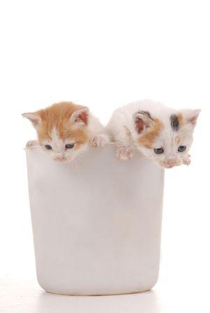 whiskar: two kitten spying